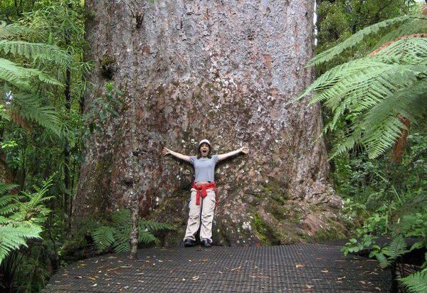 Kauri tree retreat